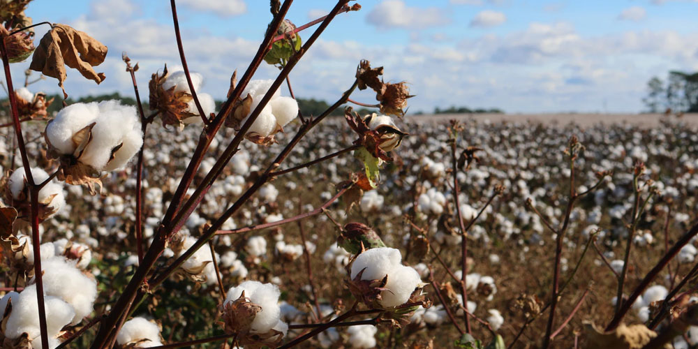 """Fabrics and the """"Better Cotton Initiative"""""""